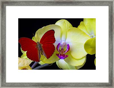Red Butterfly On Yellow Orchid Framed Print by Garry Gay