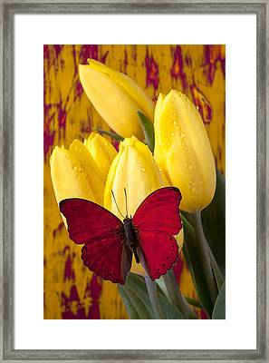 Red Butterfly Resting On Tulips Framed Print by Garry Gay