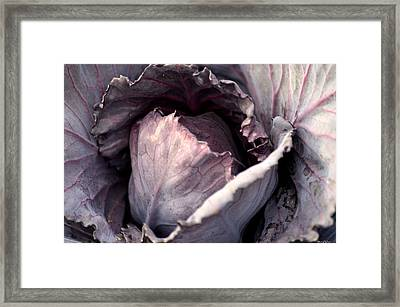 Red Cabbage Framed Print by Maria Urso
