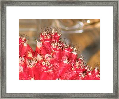 Red Cactus Framed Print by Anais DelaVega
