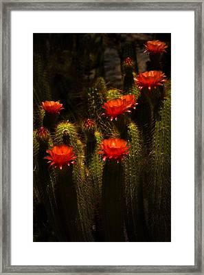 Red Cactus Flowers II  Framed Print by Saija  Lehtonen