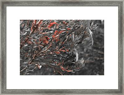 Red Camo Framed Print