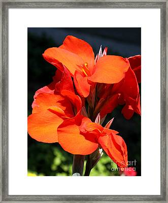 Red Canna  Framed Print by Christiane Schulze Art And Photography