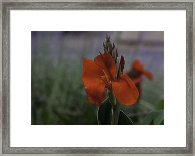 Red Canna Framed Print by Martha Burger