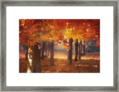Red Canopy Framed Print by Magda  Bognar