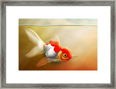 Red Cap Goldfish Framed Print