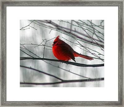 Red Cardinal On Winter Branch  Framed Print by Karen Adams