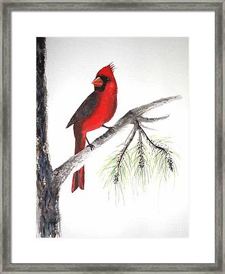 Framed Print featuring the painting Red Cardinal by Sibby S