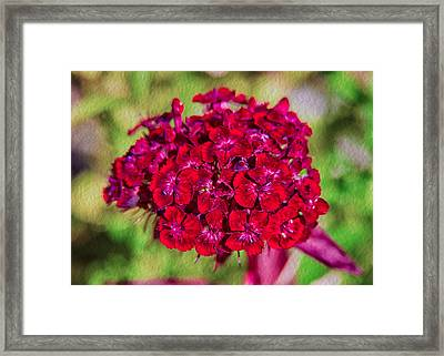 Red Carnations Framed Print by Omaste Witkowski
