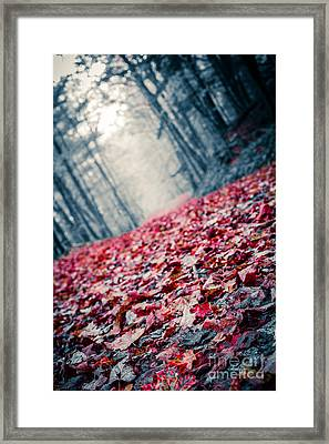 Red Carpet Framed Print by Edward Fielding