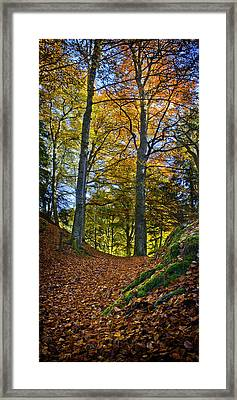 Red Carpet In Reelig Glen During Autumn Framed Print