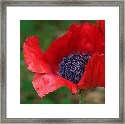 Red Carpet Rolled Out Framed Print by Kathleen Luther