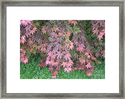 Red Cascades Into Green Framed Print