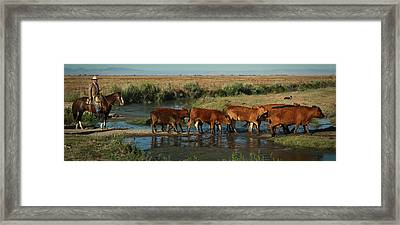 Red Cattle Framed Print by Diane Bohna