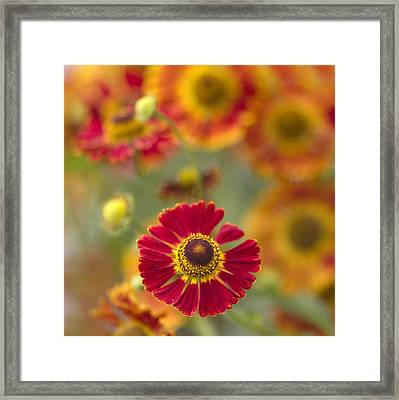 Red Centered Framed Print by Rebecca Cozart