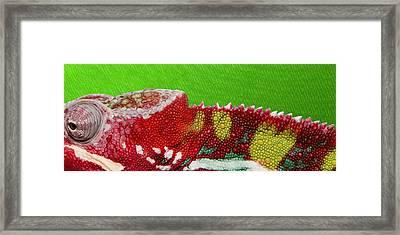 Red Chameleon On Green Framed Print by Serge Averbukh