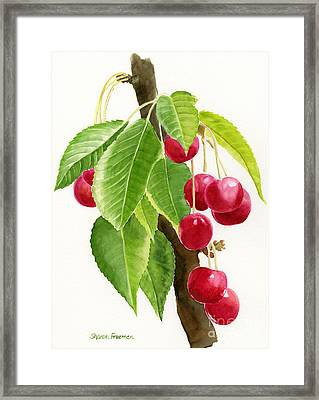 Red Cherries On A Branch Framed Print