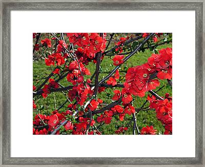 Framed Print featuring the painting Red Cherry  by Debra Crank