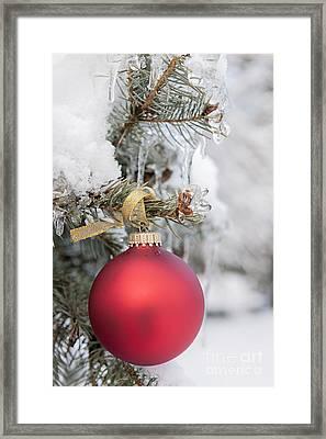 Red Christmas Ornament On Snowy Tree Framed Print by Elena Elisseeva