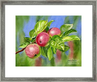 Red Cider Apples With Background Framed Print by Sharon Freeman