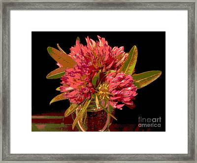 Red Clover 1 Framed Print
