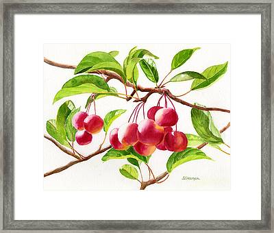 Red Crab Apples Framed Print by Sharon Freeman