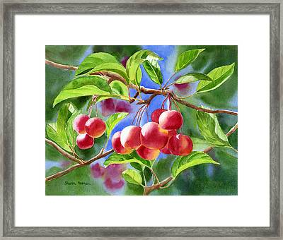 Red Crab Apples With Background Framed Print by Sharon Freeman