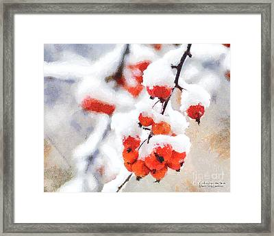 Red Crabapples In The Winter Snow - A Digital Painting By D Perry Lawrence Framed Print