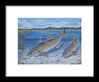 Spoonbill Framed Prints