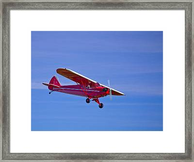 Red Cub Framed Print