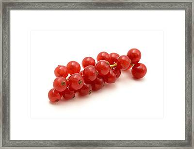 Framed Print featuring the photograph Red Currant by Fabrizio Troiani
