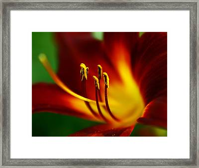 Red Curves Framed Print by Alexandra  Rampolla