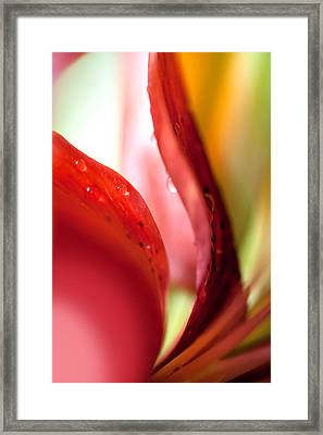 Red Curves. Lily Macro Framed Print by Jenny Rainbow