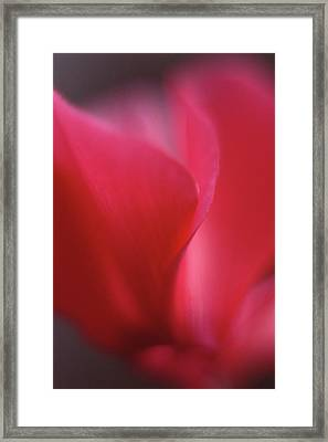 Red Cyclamen Abstract Framed Print