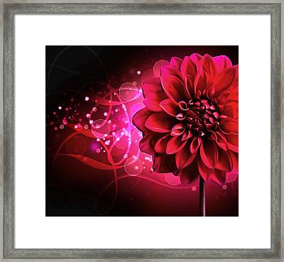 Red Dahlia Elegance Framed Print by Georgiana Romanovna