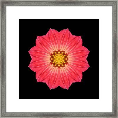 Red Dahlia Hybrid I Flower Mandala Framed Print