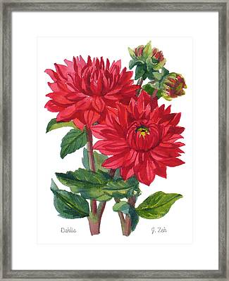 Red Dahlias Framed Print by Janet  Zeh