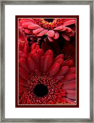 Red Daisies Framed Print by Danielle  Parent