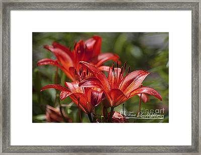 Framed Print featuring the photograph Red Day Lily 20120615_64a by Tina Hopkins