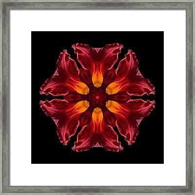 Red Daylily II Flower Mandala Framed Print