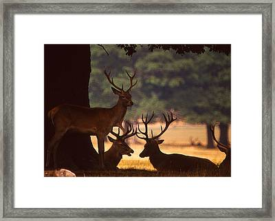 Red Deer Conference Framed Print