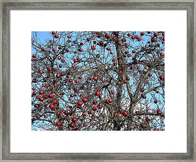 Red Delights At Season End Framed Print