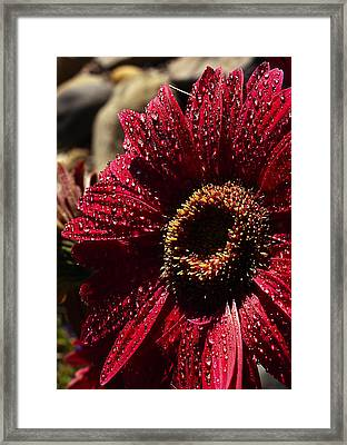 Framed Print featuring the photograph Red Dew by Joe Schofield