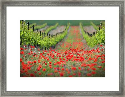 Red District Framed Print