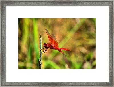 Red Dragon Dreams Framed Print