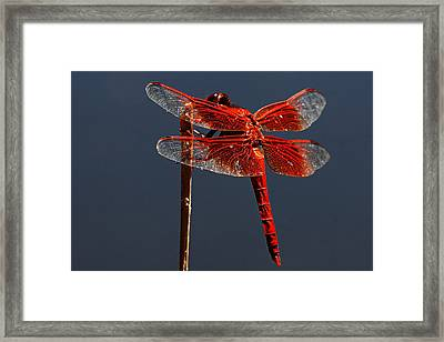 Red Dragon Framed Print by Robert Woodward