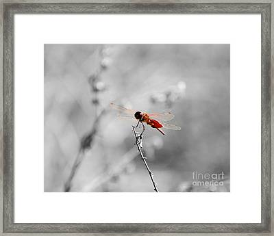 Red Dragon - Selective Color Framed Print