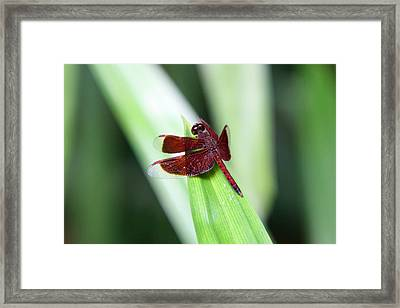 Framed Print featuring the photograph Red Dragon by Shoal Hollingsworth