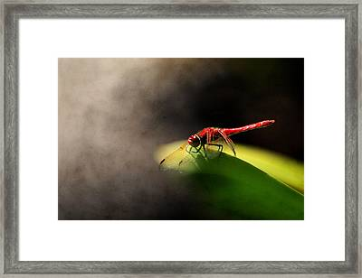 Red Dragonfly And Smoke Framed Print by Sally Bauer