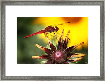 Red Dragonfly Framed Print by Martina  Rathgens